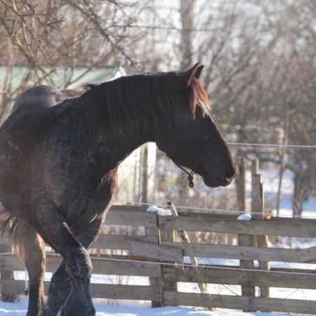 Wann frieren Pferde?