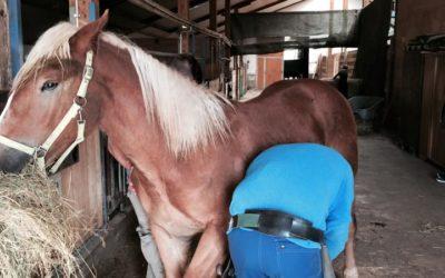 Hufe geben beim jungen Pferd