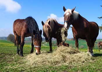Ergänzungsfutter für Pferde – was ist drin?