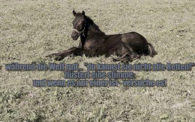 Ein Pferd vor der Schlachtung retten- ja oder nein?