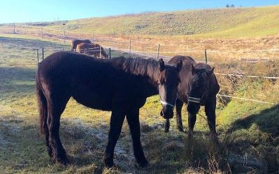 Pferdetraining Tipps als Video- Euer Input ist gefragt