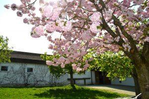 Reitanlage-Eingang-Blüten-2018-300x199-300x199