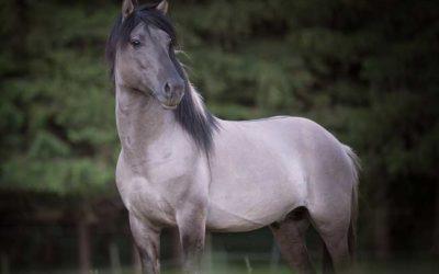 Boxenhaltung: zu wenig Bewegung für Pferde?