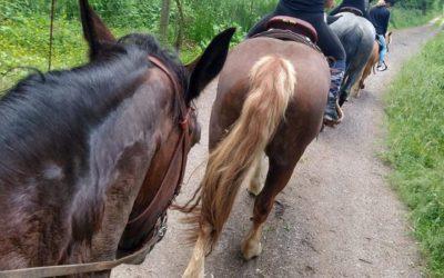 Wie viel Gewicht kann ein Pferd tragen?